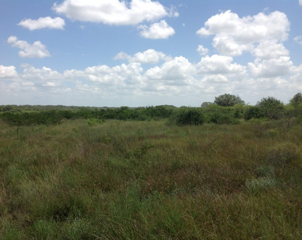 230 Acres Goliad County Tx The Texas Ranch Company