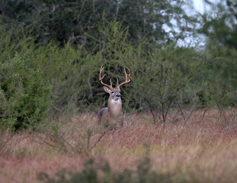 230 Acres Goliad County Tx The Texas Ranch Company