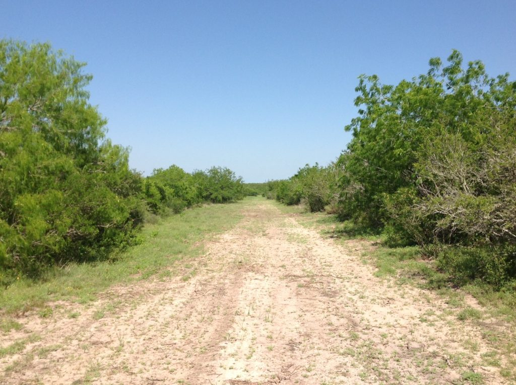 live oak county Browse mineral owners, royalty interests, appraised values, etc, for oil and gas properties in live oak county, tx we have the most comprehensive database of live oak county, tx mineral owners available.