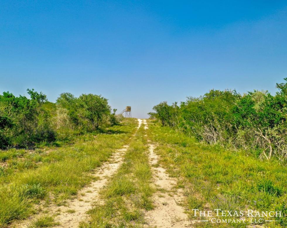 677 Acres, Live Oak County | The Texas Ranch Company